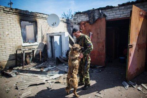 Uzticami suņi Ukrainā paliek bez mājām