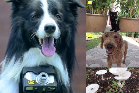 Первый в мире пес-фотограф снимает то, что заставляет его сердце биться быстрее