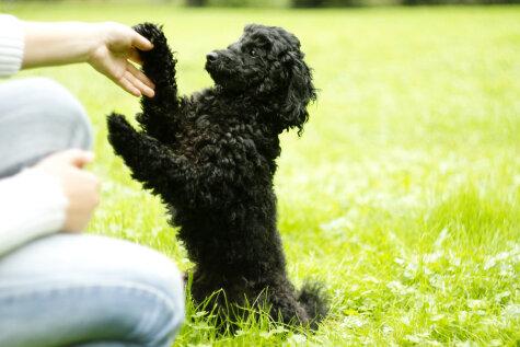 Как понять язык собаки? Несколько советов для любящих хозяев