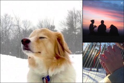 ВИДЕО: 17 коротких роликов, которые вернут тебе душевное равновесие