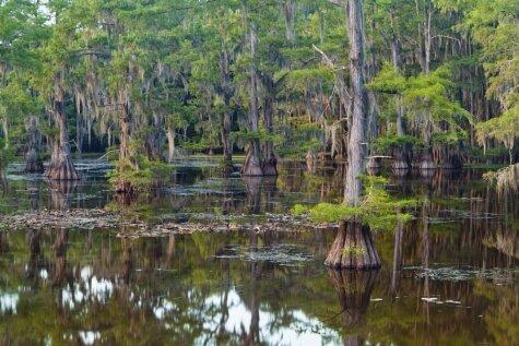 Mistiski un interesanti meži pasaulē