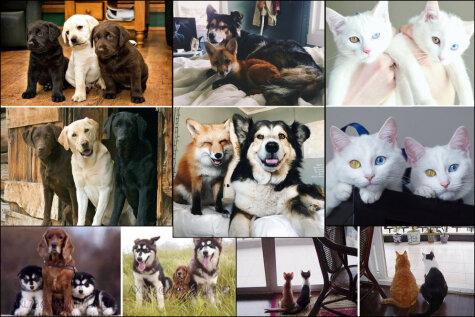 До и после: 10 фото друзей-животных, которые выросли вместе