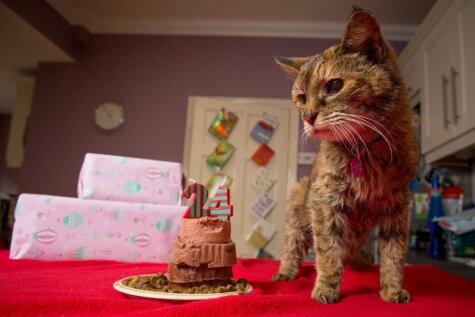 Mirusi Popija - pasaulē vecākais kaķis
