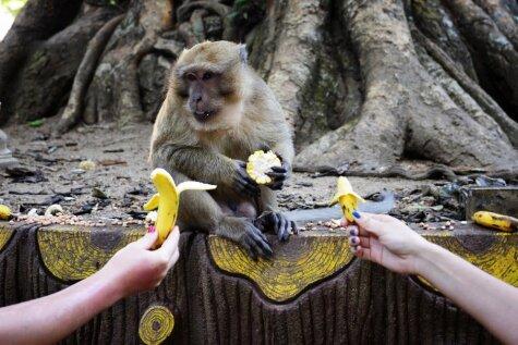 Joahimam Zīgeristam 69: Kā nopirkt tautu ar banāniem?