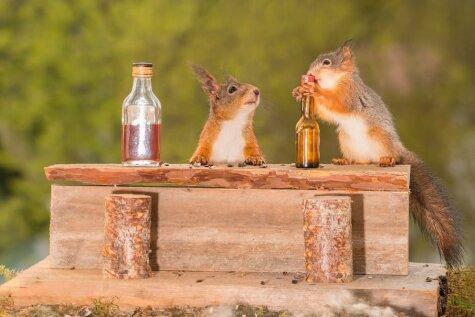Divas vāveres pieķertas, pie bāra letes lietojot alkoholu