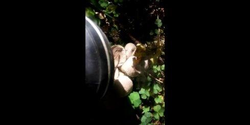 'Delfi' lasītājs spridzina pūpēžus