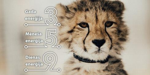 22. februāra numeroloģiskais dienas fons