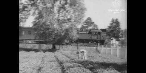 Arhīva video: Rīgas Jūrmalas zemeņu dārzos, 1946. gads