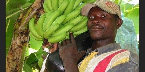 Viss notiek [29.06.09.] Par banāniem un naudu