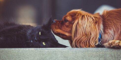 Septiņi attiecību posmi: kurā no tiem var sākt runāt par mīlestību?
