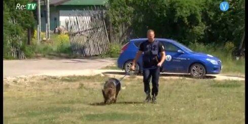 Suns palīdz policijai atrast nomaldījušos cilvēku mežā