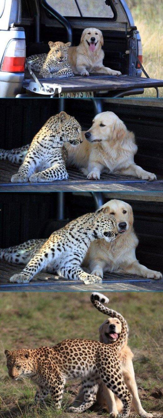 Viņš zina, ka tas ir suns?