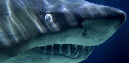 ВИДЕО: Матрос прогнал большую белую акулу шваброй