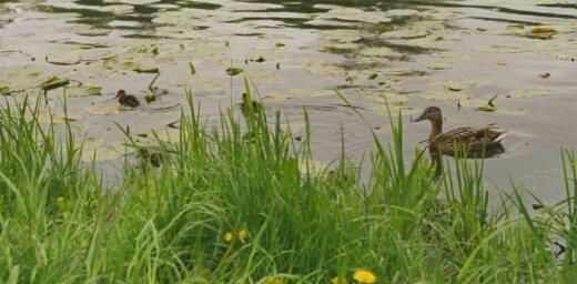 В водоемах найдены два утонувших человека