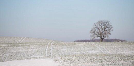 Lauksaimniekus bažīgus dara maijam neraksturīgi zemā gaisa temperatūra