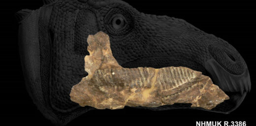 Pirmo reizi dokumentēts dinozaurs ar žokļa audzēju