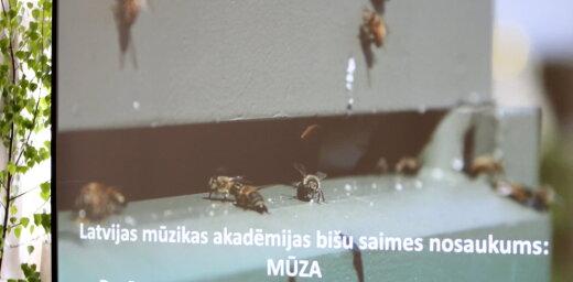 Uz Latviešu biedrības nama jumta izvieto bišu saimes