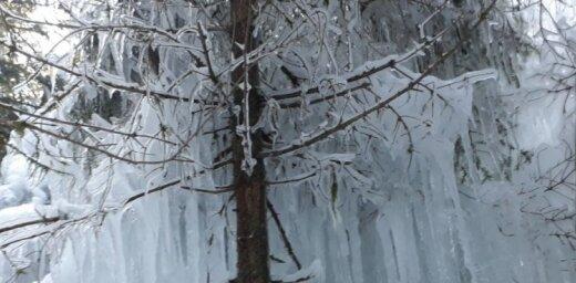 Foto: Aukstuma un ledus radītie mākslas darbi Cīrulīšu dabas takās