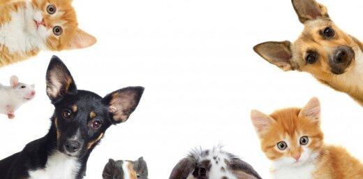 """В конце недели в холле """"Сконто"""" пройдет выставка """"Мир животных"""""""