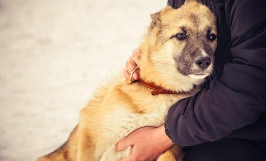 В Латвию вернулся опасный для кошек и собак вирус, схожий с бешенством Suns-saimnieks-draudziba-uzticiba-48078883
