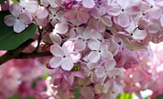 Чем заняться в выходные: Праздник бани, Фауст и цветы