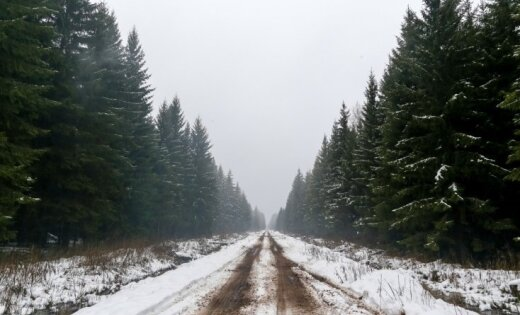 В латвийских лесах гниет древесина на 1,5 млрд евро