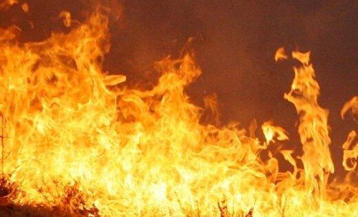Trešdien Latvijā dzēsti četri nelieli meža ugunsgrēki