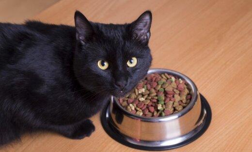 Сбежавшая кошка за полгода преодолела 950 км из Нидерландов в Австрию