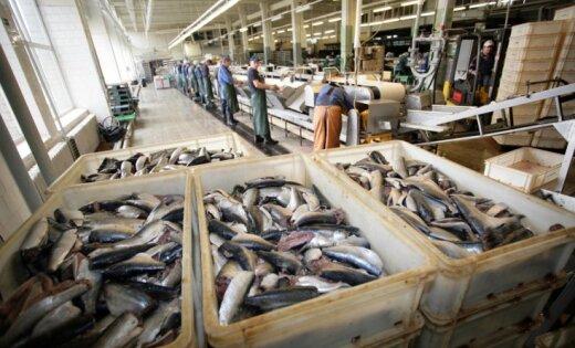 Pašmāju zivju audzētāji lēnām atkaro vietējo tirgu