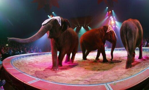 Во время представления в цирке слониха упала на зрителей