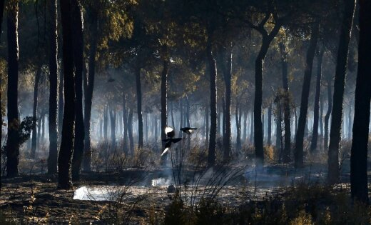 С начала года в Латвии зарегистрировано больше лесных пожаров, чем за весь прошлый год