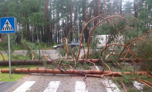 Спасатели получили 190 вызовов на устранение последствий бури