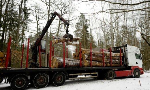Специалист: Польша вырубкой Беловежской пущи нарушает законыЕС