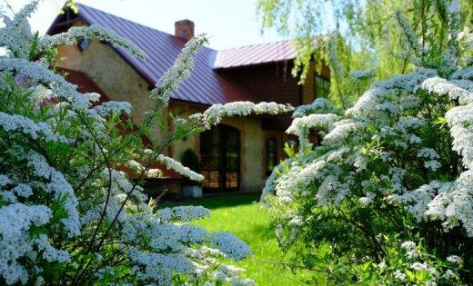 Foto: Pavasaris žilbina Siguldā