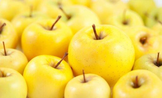 Импорт белорусских яблок и грибов в Россию в пять раз превысил урожай