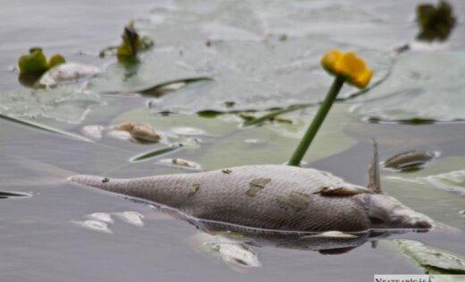 """Под Тукумсом объявлена чрезвычайная ситуация: уровень загрязнения в озере признан """"ненормальным"""""""