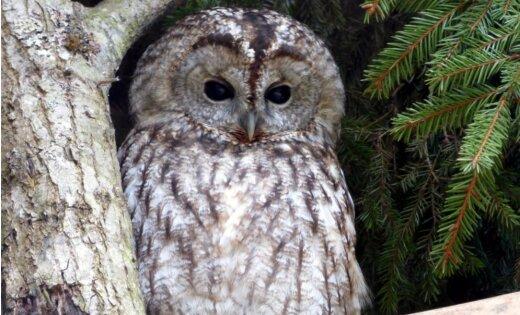 Dabas organizācijas: Kāpēc putnu skaitīšana ir svarīga mūsu bērnu nākotnei?