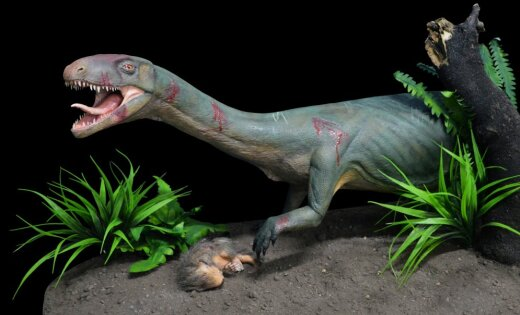 Старинный предок динозавров был похож накрокодила, ноне накурицу