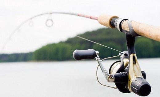 ФОТО: Рыбаки вытащили из Даугавы огромных сомов
