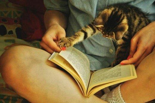 11 котиков, которые не дают людям читать, а хотят играть и мурлыкать