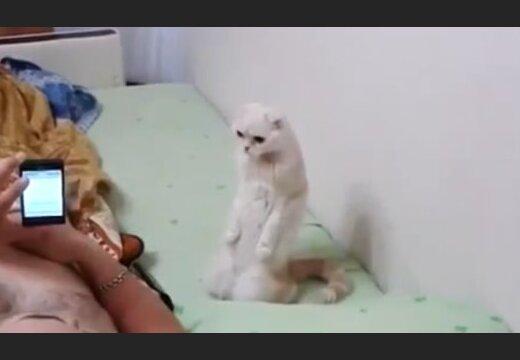 кошка патриотка слушает гимн стоя на задних лапах ютуб гимн России