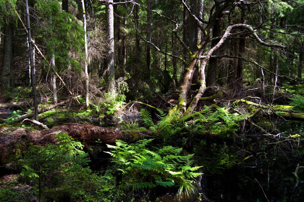 Intars Busulis: 'Mežā būt ir forši!'