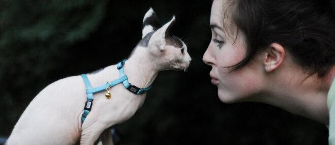 Septiņas kaķu šķirnes, kas ļoti mīl cilvēkus