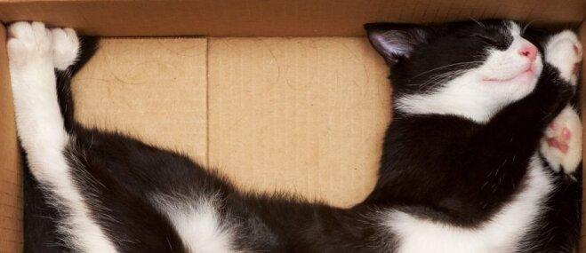 Labāk nekā ēšana: trīs darbības, kuras iecienījis teju katrs kaķis
