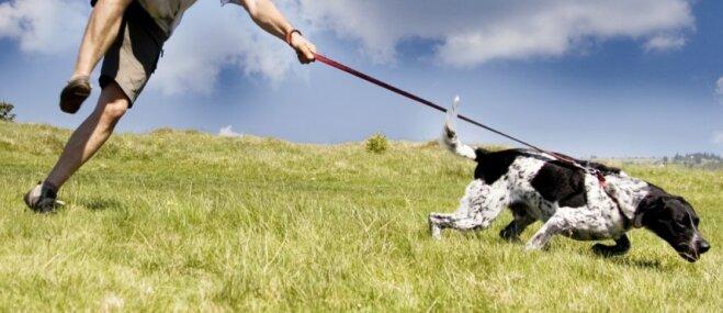 Suņa saimnieka etiķete: priekšnoteikumi, kas jāievēro katram