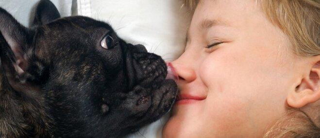 Kāpēc nevajadzētu sunim ļaut laizīt seju