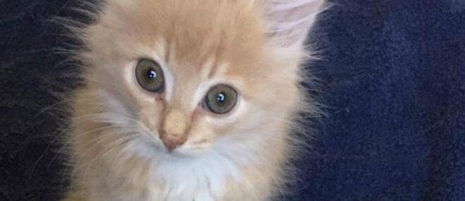 Lūdz palīdzēt kaķīšiem, kuri jāārstē ar antibiotikām
