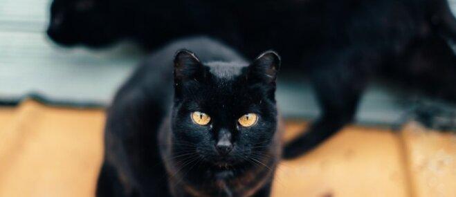 Kāpēc kaķi nav bara dzīvnieki