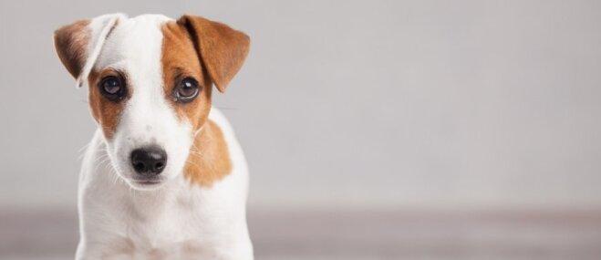 'Dogo' sāga: Suņu saslimšanu uzliesmojums beidzies; speciāliste aicina joprojām būt vērīgiem