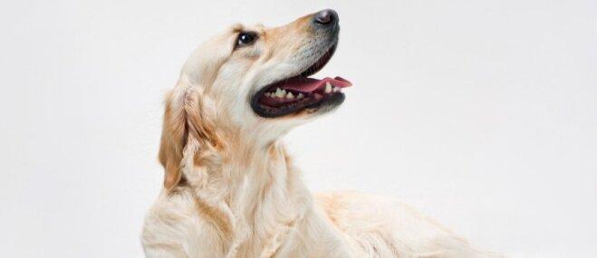 'Dogo' sāga: Ministrija nepiešķirs finansējumu suņiem bīstamās slimības turpmākajam pētījumam